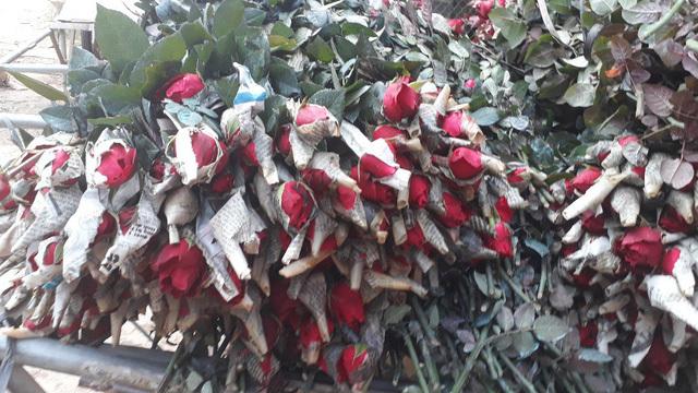 Rời Thủ đô lên phố núi trồng hoa hồng, chàng trai rinh gần 1 tỷ mỗi năm-4