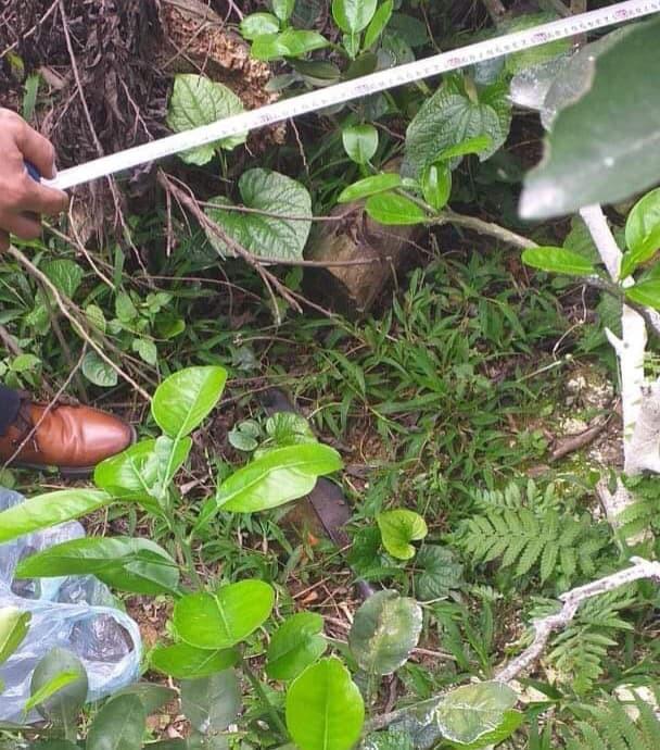 Bắc Giang: Thanh niên tâm thần bị hàng xóm chém 7 nhát vì làm đổ tường gạch và gãy cây cối trong vườn-3