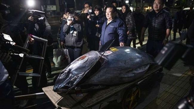Những con cá nhà giàu có giá gấp chục lần siêu xe-3