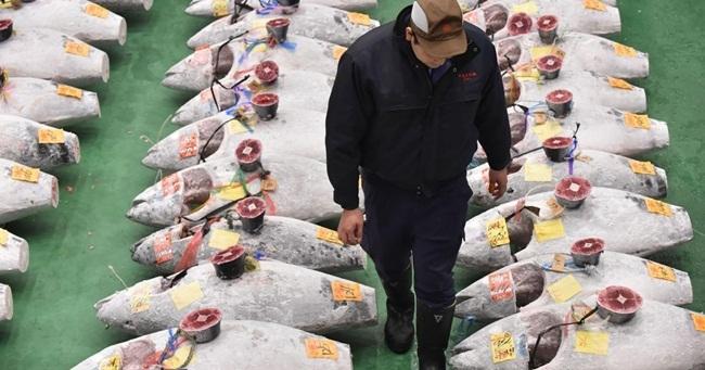 Những con cá nhà giàu có giá gấp chục lần siêu xe-5