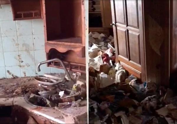 Bé gái bị bỏ rơi trong căn nhà ngập rác, gián, không biết nói và giao tiếp xã hội-3