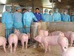 """Lòng trần cháo vẫn đông khách, giá thịt không giảm trước cơn bão"""" dịch tả lợn Châu Phi-4"""