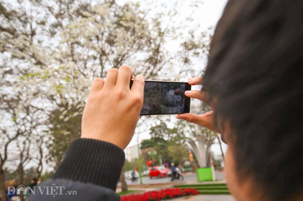 Ảnh: Tháng 3 - mùa hoa sưa nở trắng trời Hà Nội-5