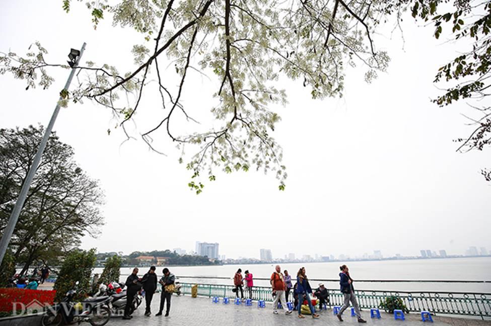 Ảnh: Tháng 3 - mùa hoa sưa nở trắng trời Hà Nội-13