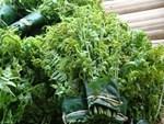 Ở Việt Nam mọc dại đầy đường, sang Nhật bán trong siêu thị gần triệu đồng/kg-9