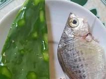 Chuyện thật như đùa: Xương rồng nấu canh là món ngon khó cưỡng, đặc sản của mùa hè miền Trung