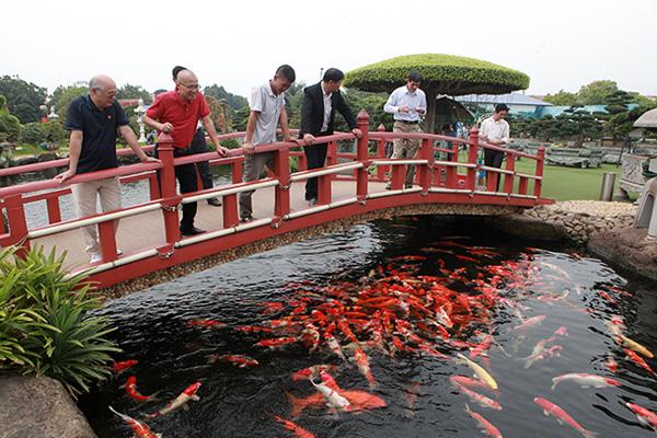 Đại gia Thái Nguyên sang tận Nhật Bản sắm đàn cá bạc tỷ về chơi-2
