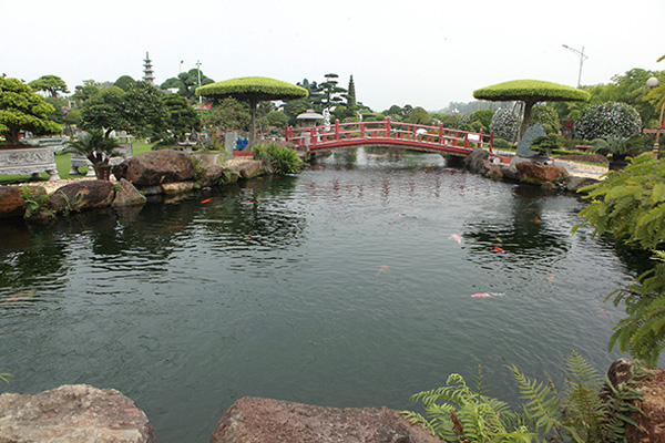 Đại gia Thái Nguyên sang tận Nhật Bản sắm đàn cá bạc tỷ về chơi-6