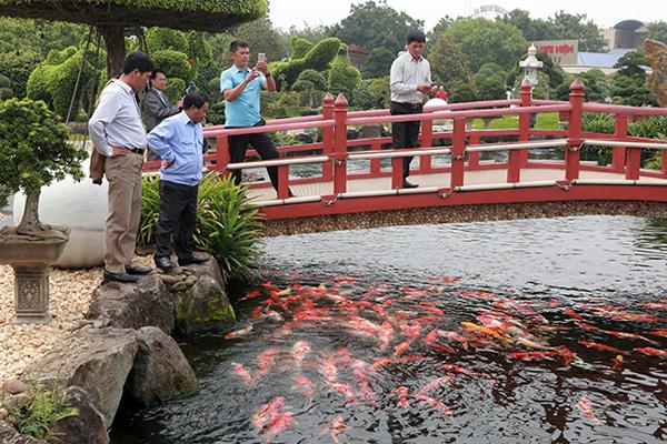 Đại gia Thái Nguyên sang tận Nhật Bản sắm đàn cá bạc tỷ về chơi-8