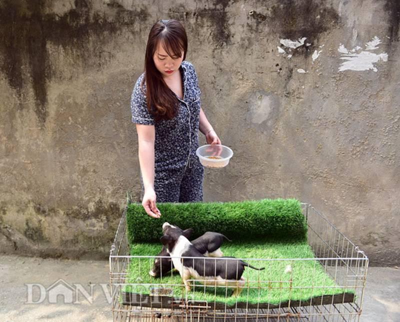 Ngắm lợn mini tiền triệu giới trẻ Hà thành săn lùng làm thú cưng-6