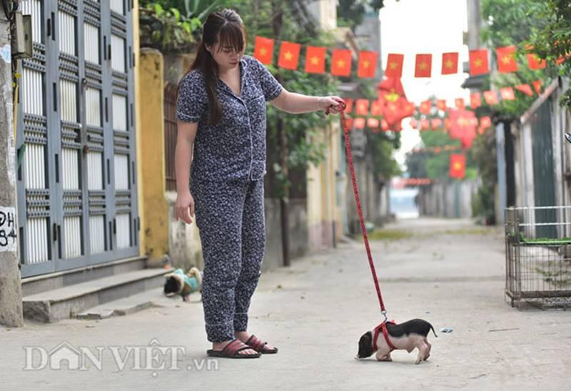 Ngắm lợn mini tiền triệu giới trẻ Hà thành săn lùng làm thú cưng-11