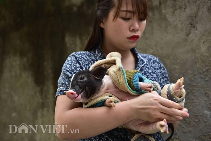 Ngắm lợn mini tiền triệu giới trẻ Hà thành săn lùng làm thú cưng-9