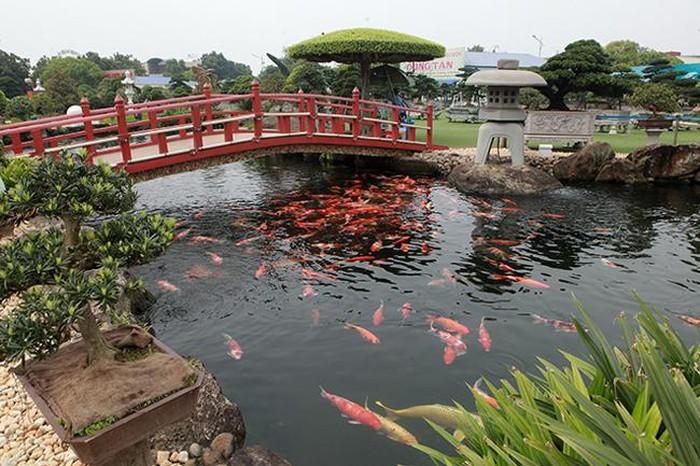Khu vườn Nhật và đàn cá Koi 10 tỷ của đại gia Thái Nguyên-5