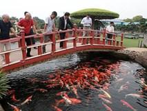 Khu vườn Nhật và đàn cá Koi 10 tỷ của đại gia Thái Nguyên