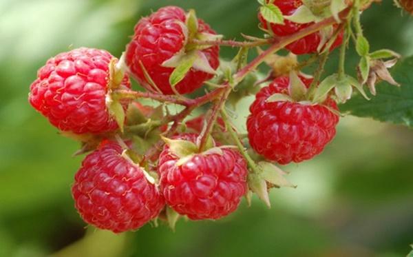 Những loại quả mọng mang đến lợi ích tuyệt vời cho sức khỏe-2