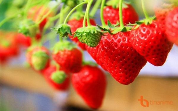 Những loại quả mọng mang đến lợi ích tuyệt vời cho sức khỏe-4