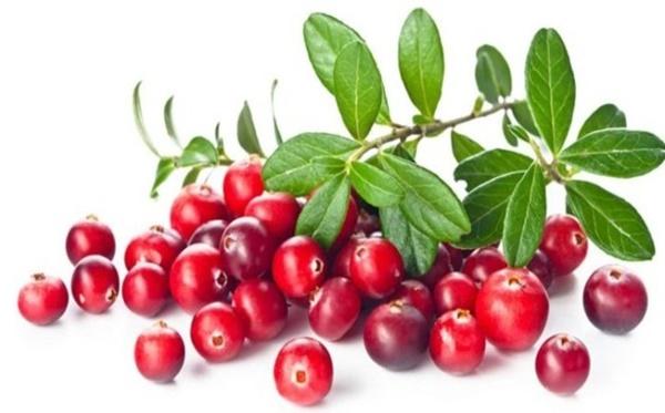Những loại quả mọng mang đến lợi ích tuyệt vời cho sức khỏe-6