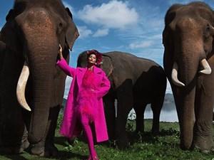H'Hen Niê diện trang phục rực rỡ sắc màu, tạo dáng bên voi Tây Nguyên