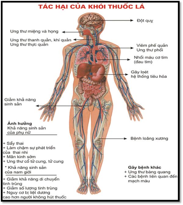 80% trẻ Việt dưới 5 tuổi bị phơi nhiễm khói thuốc lá-2