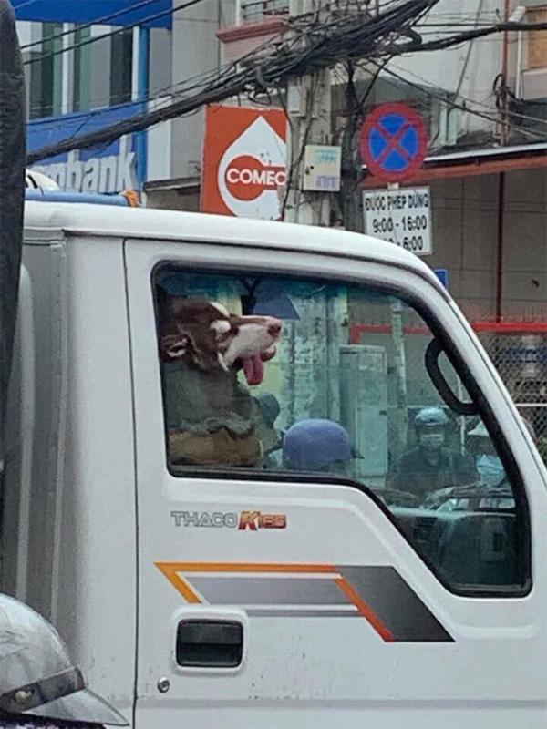 Hình ảnh chú chó say xe, thò đầu qua cửa sổ khiến người đi đường phải ngoái lại nhìn-2