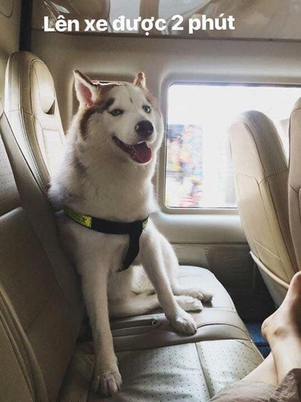 Hình ảnh chú chó say xe, thò đầu qua cửa sổ khiến người đi đường phải ngoái lại nhìn-3