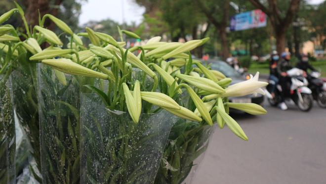 Loài hoa hái ra tiền bỗng dưng mất tích ở thủ phủ hoa Tây Tựu?-11