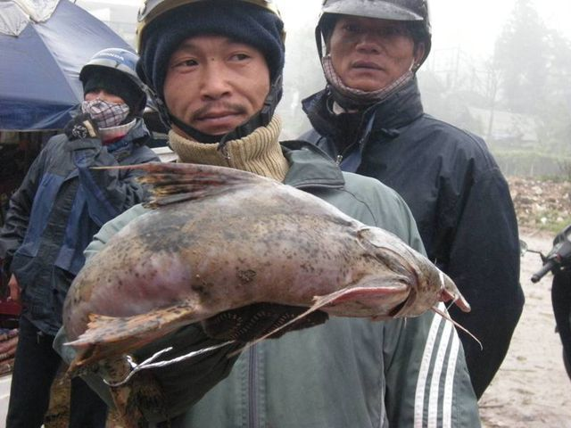 Tứ độc đặc sản cá cực hiếm ở miền núi, có tiền cũng khó mua-1
