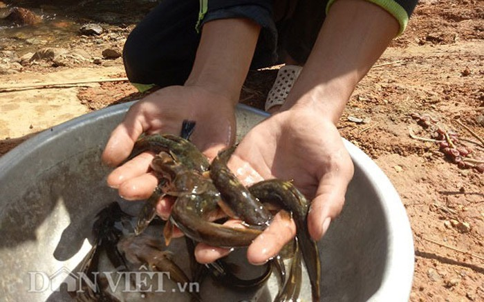 Tứ độc đặc sản cá cực hiếm ở miền núi, có tiền cũng khó mua-14