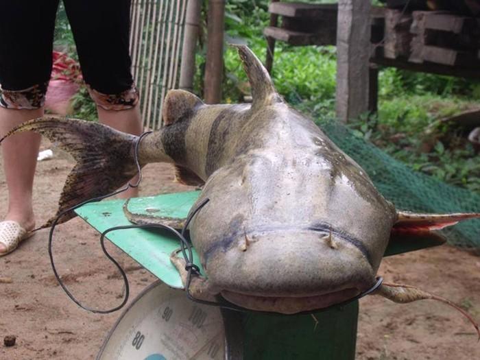 Tứ độc đặc sản cá cực hiếm ở miền núi, có tiền cũng khó mua-5
