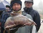 5 loài cá cực hiếm được ví là ngũ quý hà thủy, có tiền cũng khó mua-6