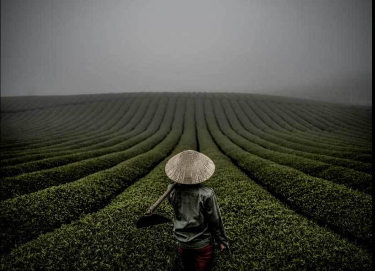 Việt Nam đẹp nghẹt thở qua ống kính nhiếp ảnh gia Mỹ-3