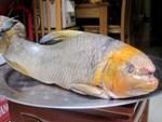 Cây bí ẩn, thả xuống nước hàng trăm kg cá trúng thuốc tha hồ vớt-14