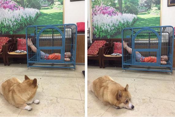 Cậu bé hồn nhiên chiếm dụng chuồng của chú chó đáng thương, nhưng đây mới là điều khiến dân mạng cười muốn té ghế-1