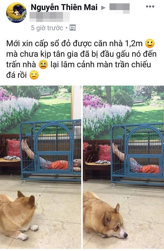 Cậu bé hồn nhiên chiếm dụng chuồng của chú chó đáng thương, nhưng đây mới là điều khiến dân mạng cười muốn té ghế-2