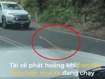 Tài xế phát hoảng khi phát hiện rắn nằm trên mui xe đang chạy