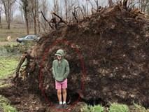 Chuyện kinh dị có thật: Cậu bé hí hửng chụp ảnh gần gốc cây cổ thụ đã đổ, cây bất thình lình bật dậy