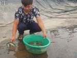 Học ngành y, trai đẹp lại về quê nuôi loài cá sống thọ tới 50 năm-2