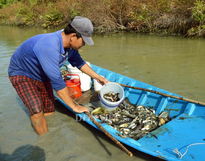 Cây bí ẩn, thả xuống nước hàng trăm kg cá trúng thuốc tha hồ vớt-1