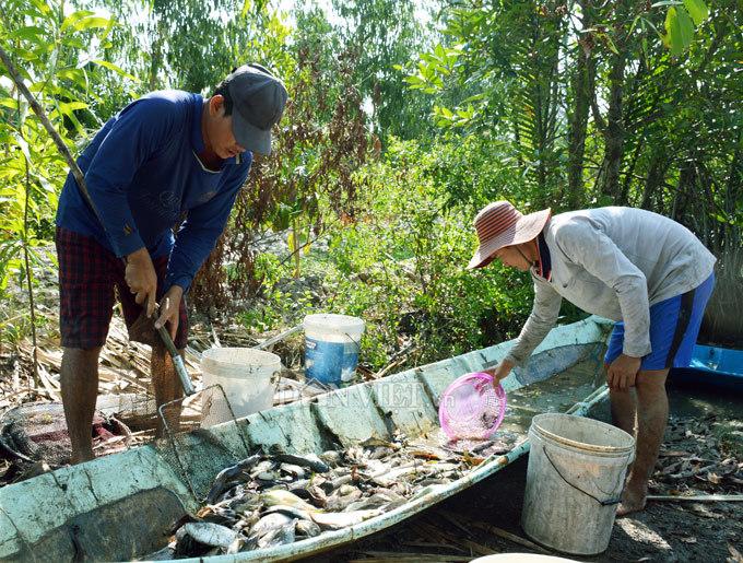 Cây bí ẩn, thả xuống nước hàng trăm kg cá trúng thuốc tha hồ vớt-11