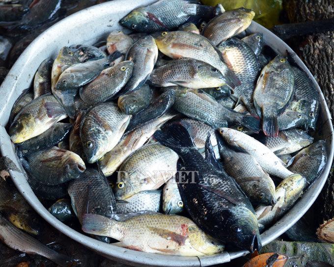 Cây bí ẩn, thả xuống nước hàng trăm kg cá trúng thuốc tha hồ vớt-6