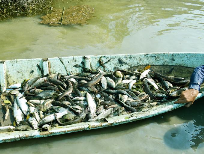 Cây bí ẩn, thả xuống nước hàng trăm kg cá trúng thuốc tha hồ vớt-9