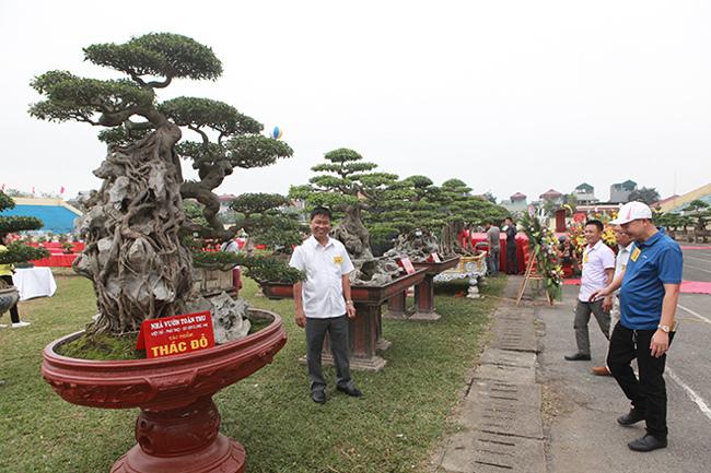 Kiệt tác sanh cổ thác đổ ngồi đá hiếm có của đại gia Phú Thọ-1