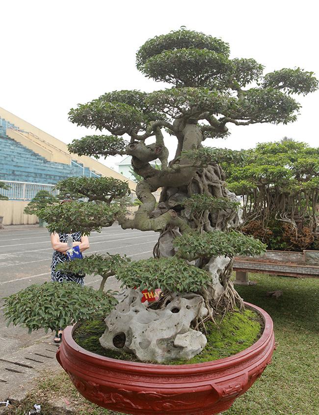 Kiệt tác sanh cổ thác đổ ngồi đá hiếm có của đại gia Phú Thọ-15