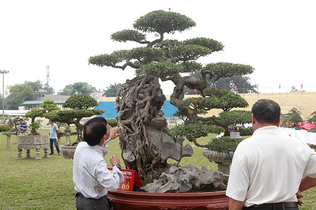 Kiệt tác sanh cổ thác đổ ngồi đá hiếm có của đại gia Phú Thọ-2
