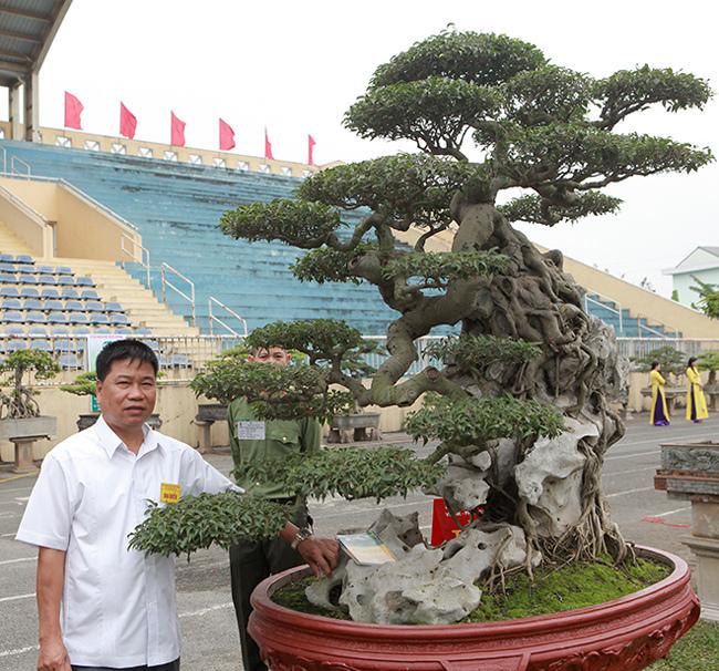 Kiệt tác sanh cổ thác đổ ngồi đá hiếm có của đại gia Phú Thọ-4