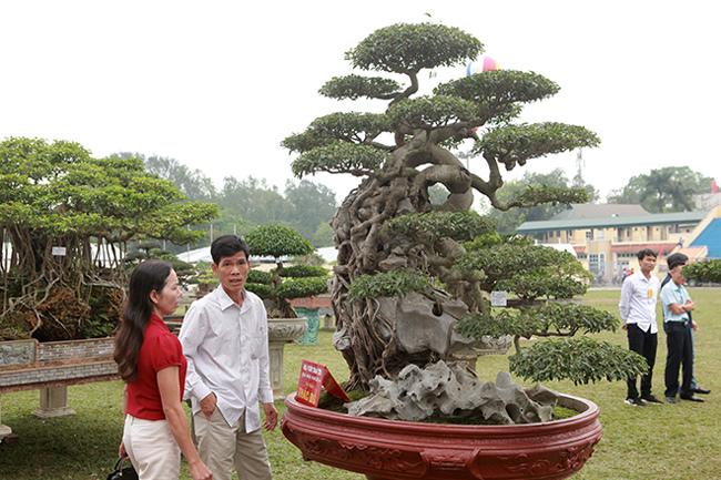 Kiệt tác sanh cổ thác đổ ngồi đá hiếm có của đại gia Phú Thọ-5