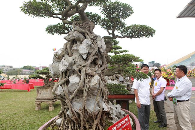 Kiệt tác sanh cổ thác đổ ngồi đá hiếm có của đại gia Phú Thọ-6