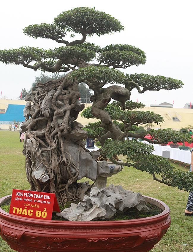Kiệt tác sanh cổ thác đổ ngồi đá hiếm có của đại gia Phú Thọ-7