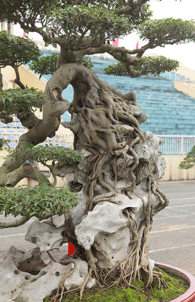 Kiệt tác sanh cổ thác đổ ngồi đá hiếm có của đại gia Phú Thọ-9