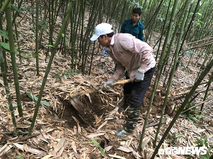 Kỳ thú chuyện săn lùng loài chuột khổng lồ trong rừng tây Yên Tử-1